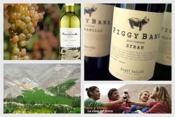 Vinos del vallé de Elqui / Vins de la Vallée d'Elqui