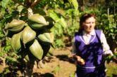 papaya de cobquecura