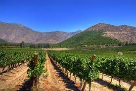 vinosvalledeaconcagua